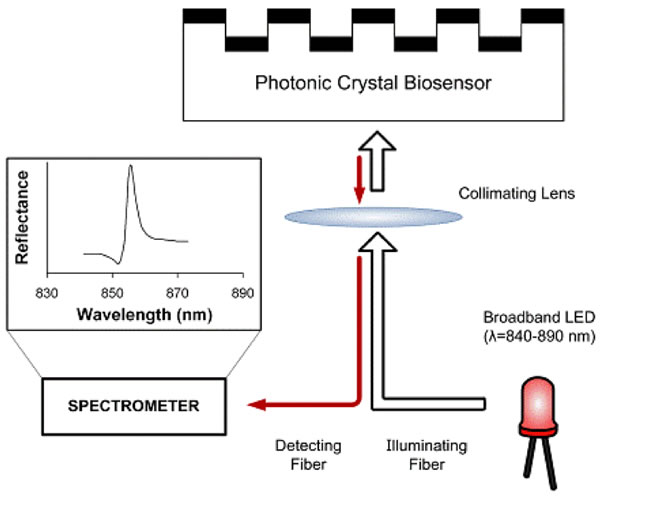Figure 2. Schematic of the photonic crystal biosensor readout method, in which a broadband light source (such as a light bulb or LED) illuminates the biosensor surface at normal incidence and a narrow band of wavelength is reflected. A spectrometer records changes in the reflected wavelength as biomaterial attaches to the photonic crystal surface.