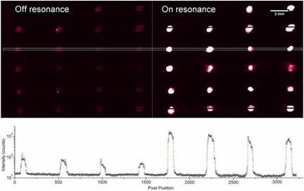 Figure 2. Fluorescence scans off (left) and on (right) resonance measured for photonic crystal device, showing the enhanced fluorescence effect. The plot below the figure shows the intensity profile on the sensor surface as a function of position, as marked by the line on the fluorescence scans.
