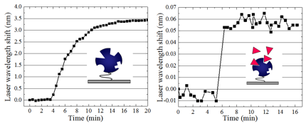 Figure 4. The kinetic detection of wavelength shift of the streptavidin immobilization and the biotin binding with the streptavidin process.