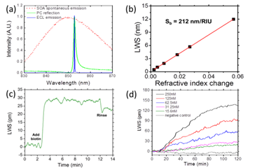 Figure 6. External cavity laser characterization: (a) Overlaid SOA spontaneous emission spectrum, PC resonant reflection spectrum, and ECL single-mode emission spectrum. (b) Bulk sensitivity characterization of ECL sensor. (c) Dynamic binding of Biotin to SA (d) Dynamic measurement of the specific hybridization of complement probe DNA and target DNA molecules.The system is capable of lasing at two wavelengths simultaneously, enabling a highly accurate reference sensor to reject common mode noise sources, which in turn enables high sensitivity detection of small molecule drug interaction with proteins. This novel ECL label-free biosensor that simultaneously achieves high resolution, high sensitivity, large dynamic range, and CW operation offers opportunities in extending the limits of detection of label-free assays.